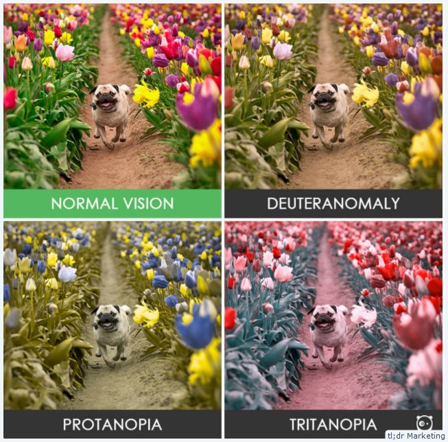 Use Chrome DevTools to See How Users Who Experience Color Blindness or Blurred Vision Might See Your Site